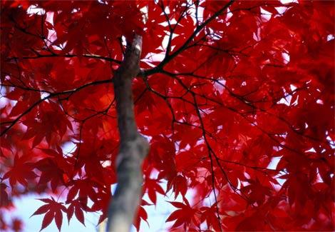 Красный цвет картинки 1
