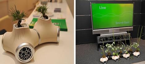 bonsai speaker