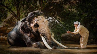 Un mahout si … baita unui elefant