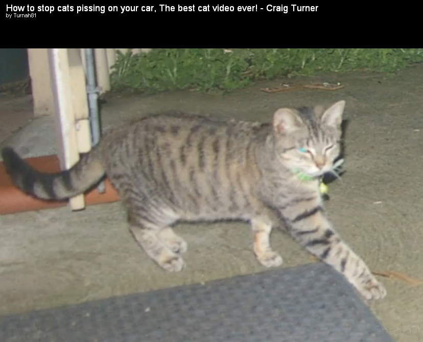 Razboi cu pisicile vecinilor