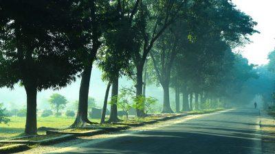 O plimbare dimineata in loc de cafea