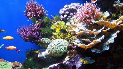 Gradina de corali
