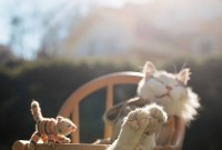 Ce ne-am face daca n-ar fi pisicile?