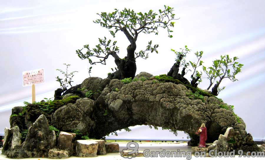 penjing-bonsai-exhibition-07