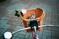 Pisica biciclista