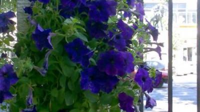 Barbatii ofera flori
