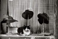 Pisica si palariile