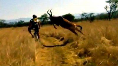 Mountain biker facut KO de o antilopa