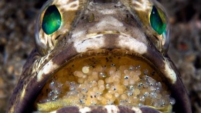 Foto premiate – comori subacvatice